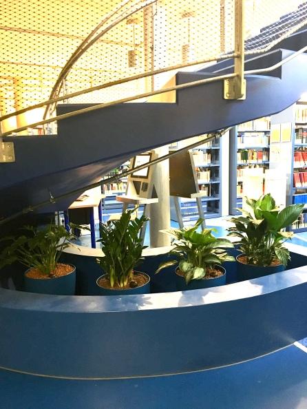 Pflanzen D3.jpeg2