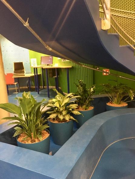 Pflanzen D3